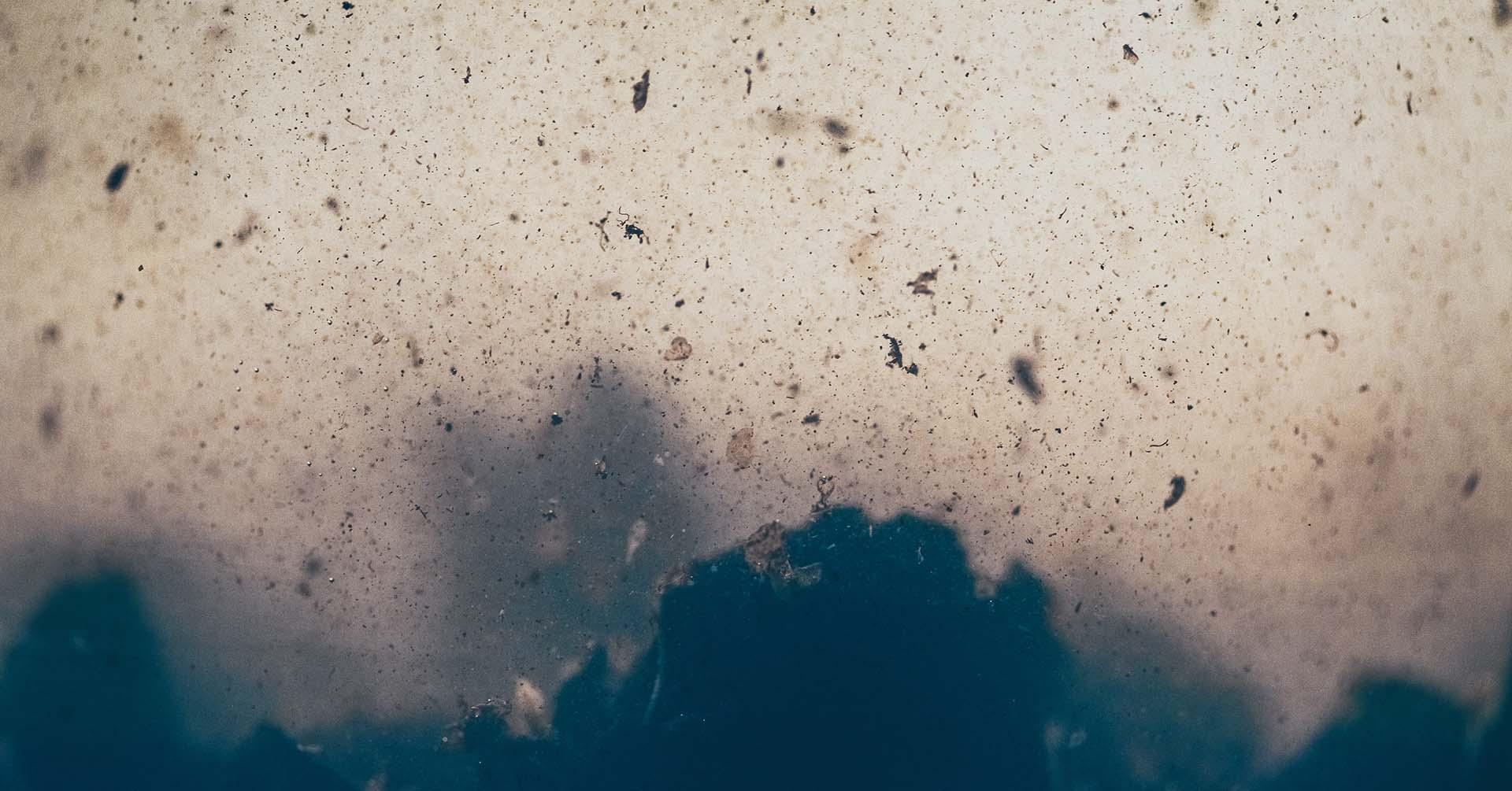 Bakterie, grzyby i drobnoustroje w samochodzie.